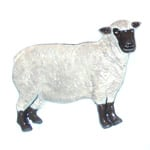 Vendeen Sheep