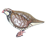 Grouse Partridge